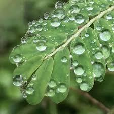 Image result for titis hujan