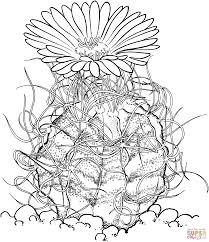 Astrophytum Capricorne Or Goat S Horn