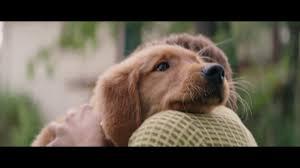 a dog s purpose bailey. Fine Bailey A DOGu0027S PURPOSE 2017 Clip  My Name Is Bailey Josh Gad Movie Intended Dog S Purpose U