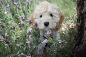 there is nothing like a splash of color to go along with the new green when we think of spring gardening pet pas often worry about poisonous plants