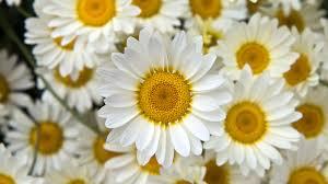 Cute Flower Wallpaper Tumblr ...