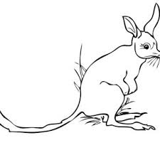 Small Picture Photos Of Bilby Coloring Pages Pictures Dingo Fisher cat Drawings
