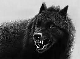 фото волка с оскалом