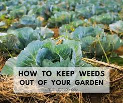 weeds go away naturally