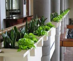 interior landscaping office. Interior Landscaping Office N