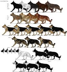 Dog Color Chart German Shepherd Color Chart Goldenacresdogs Com