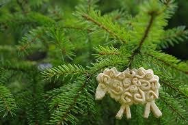Weihnachtsbaumschmuck Aus Salzteig Selbst Herstellen