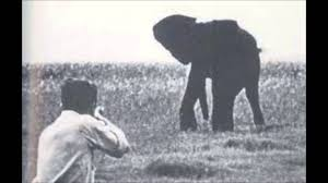 george orwell shooting an elephant essay shooting an elephant shooting an elephant george orwell essay gxart orgshooting an elephant by george orwell