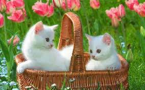cute pets full hd quality wallpapers
