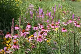 Garden Design Tips Magnificent Wildflower Garden Design Gallery
