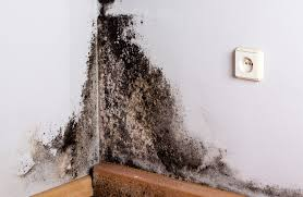 black mold symptoms what happens when