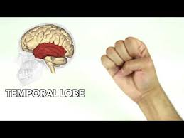 How To Learn Major Parts Of The Brain Quickly Youtube
