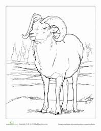 Small Picture Printable Coloring pages bighorn sheep 35720 bighorn sheep