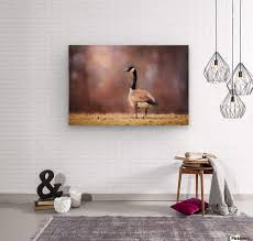 autumn canada goose wood print