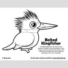 Small Picture Belted Kingfisher Coloring Page Fun Free Downloads Activity