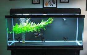 what is the best filter for 75 gallon tank