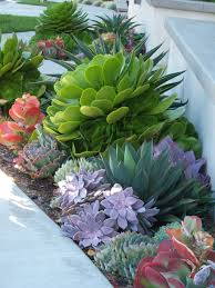 Cactus Succulent Landscape Design Ca Friendly Design Ideas Gardening Succulent Landscaping