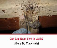 can bed bugs live in walls