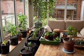 best indoor plants for office. Indoor House Plantsindoor Best Plants For Office