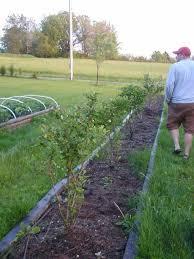 blueberry soil mix.  Mix PREPARING THE SOIL In Blueberry Soil Mix Y