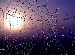 Картинки по запросу паутина