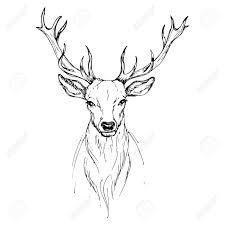 Vector Sketch By Pen Noble Deer Front View