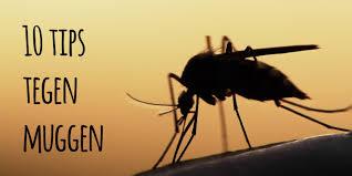 Wat helpt tegen jeuk muggen