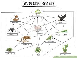 Producers And Consumers Venn Diagram How To Draw A Food Web With Pictures Wikihow