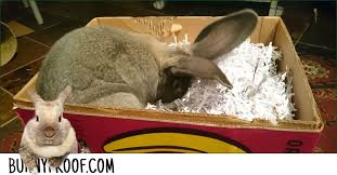 how to make a digging box for your bunny