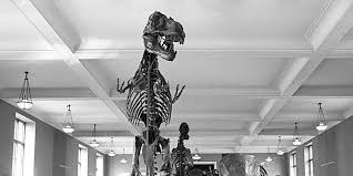 How <b>T</b>. <b>rex</b> Lost Its Third Claw | AMNH
