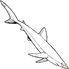 Small Picture Blue Shark coloring page Free Printable Coloring Pages