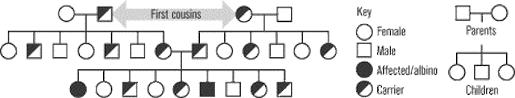 Albinism Pedigree Chart Albinism