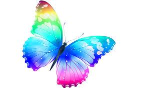Butterfly most beautiful desktop wallpaper