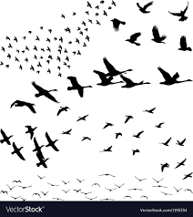 flock of birds silhouette. Wonderful Flock Silhouette A Flock Of Birds Vector Image Throughout Flock Of Birds E