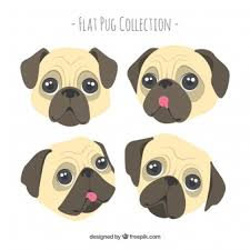 cute pug drawing. Plain Drawing Lovely Pack Of Cute Pug Faces And Cute Pug Drawing