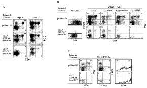an improved retroviral gene transfer technique demonstrates figure