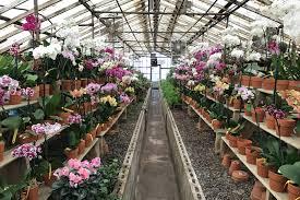 garden centers near me.  Garden Fabulous Garden Centres Near Me And Centers N