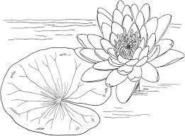 Small Picture Nymphaea Mexicana and Lily Pad Coloring Page Color Luna