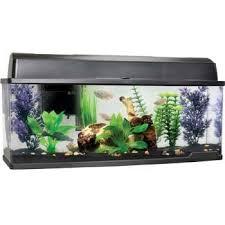 petco fish tanks. Unique Tanks Petco Bookshelf Freshwater Fish Aquarium On Tanks T