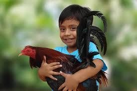 Bildresultat för djur och barn
