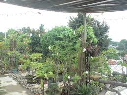 philippines house roof deck roof garden. Roof Deck Garden Philippines House