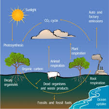 the diagram below illustrates the carbon cycle in nature essay topics the diagram below illustrates the carbon cycle in nature