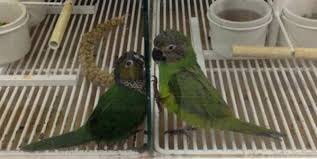 petco animals birds. Perfect Birds PETCO Please Discontinue The Sale Of Birds In Your Stores To Petco Animals Birds E