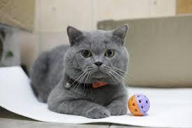 Kết quả hình ảnh cho mèo