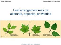 7 leaf arrangement may be alternate opposite or whorled