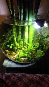aquarium garden. Beautiful Aquarium Cool Aquarium Garden In A Bowl Intended Aquarium Garden