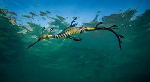 Meet The Creatures In Port Phillip Bay