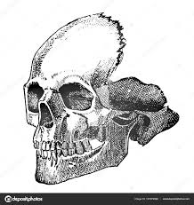 Art Sketch Tattoo Detailed Skull Person Close New School Style