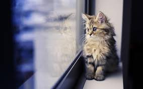 Fluffy Kitty Wallpapers - Wallpaper Cave