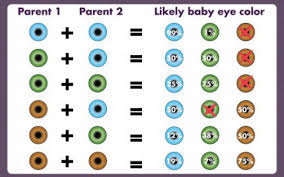 Eye Color Recessive Dominant Chart 53 Problem Solving Dominant Eye Color Chart